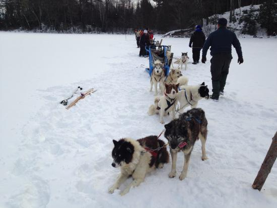 Wintergreen Dogsledding Lodge: Dog Sledding Team: Odin-Susi, Ethyl-Frazer, Ole-Pingo