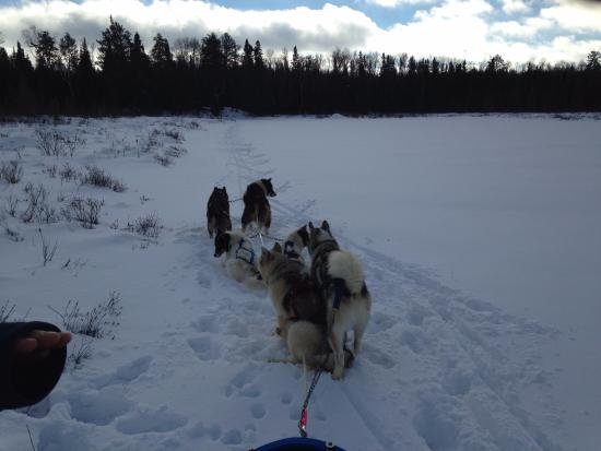 Wintergreen Dogsled Lodge: Guide on X-Country Skis, Team breaking trail for the 3 remaining sleds