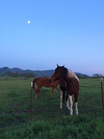 Squaw Valley, Kalifornia: photo0.jpg