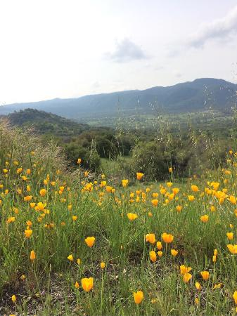 Squaw Valley, Kalifornia: photo1.jpg