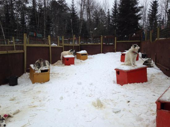 Wintergreen Dogsled Lodge: Sled dog accommodations.