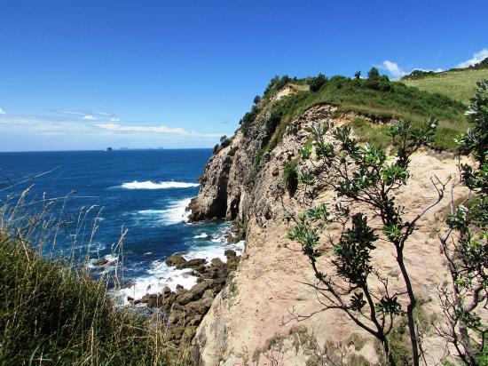 Coromandel Peninsula Foto