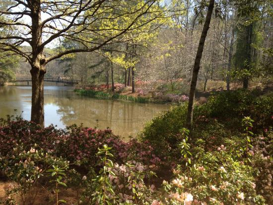 First glimpse of lake with blooms picture of callaway for Callaway gardens fishing