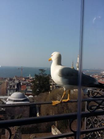 Ada Hotel Istanbul: terrasse