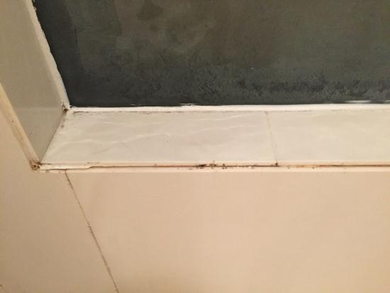 shower in our room has lots of mold doesn t look like it s been rh tripadvisor com au