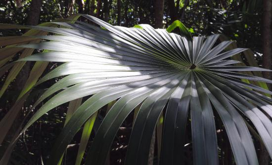 The Retreat Garden National Park: Another palm