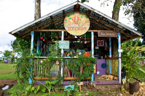 coconut glen s not only has amazing ice cream but they have a super rh tripadvisor co za