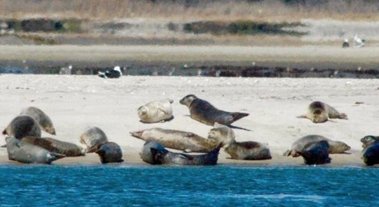 Seals Picture Of Cupsogue Beach County Park Westhampton Beach Tripadvisor