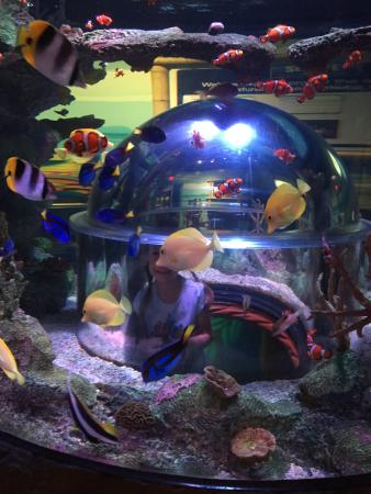 Finding Nemo And Dory Picture Of Sea Life Aquarium