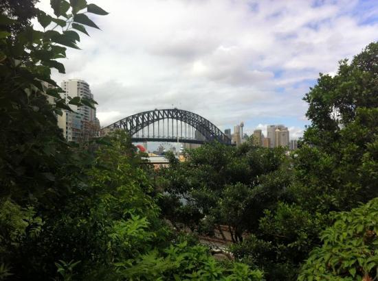 Harbour bridge from top of garden picture of wendy My secret garden bay city