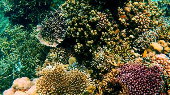 Forgot The Name Of This Fish D Picture Of Coral Garden