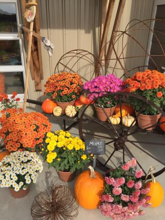 Alexandria, MN: Country Blossom Farm