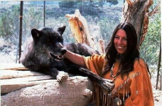 Wolf Mountain Sanctuary Lucerne Valley Ca Award