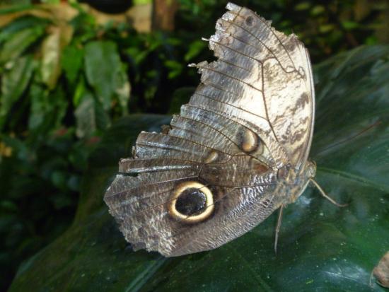GumboLimbo Jungle Resort: Butterfly farm