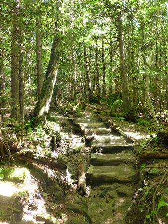 Sevier County, TN: The trail