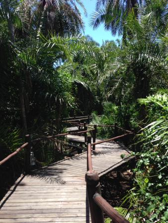 Saadani National Park, แทนซาเนีย: Private walkway to our luxury accomodations.