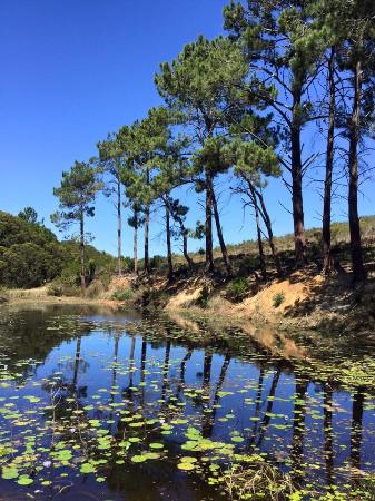 Hermanus, Güney Afrika: Small pond on the route, nice shady stop for a rest