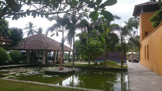 Angulugaha, Sri Lanka: DSC_0616_large.jpg