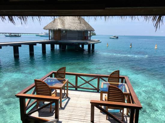 Foto de ithaa undersea restaurant rangali island our for Viajes rangali opiniones