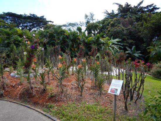 Plantes exotiques picture of jardin botanique de for Jardin botanique deshaies