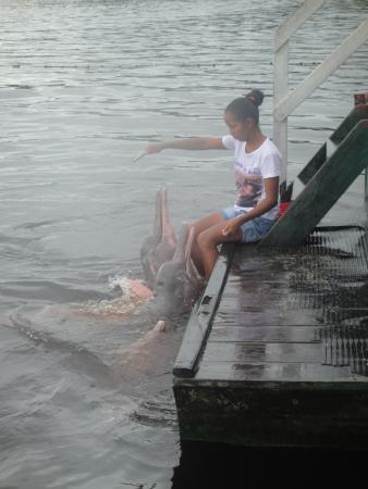 Pink Dolphins Floating Platform