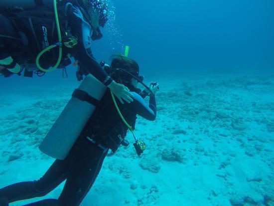 Paradise Divers: photo1.jpg