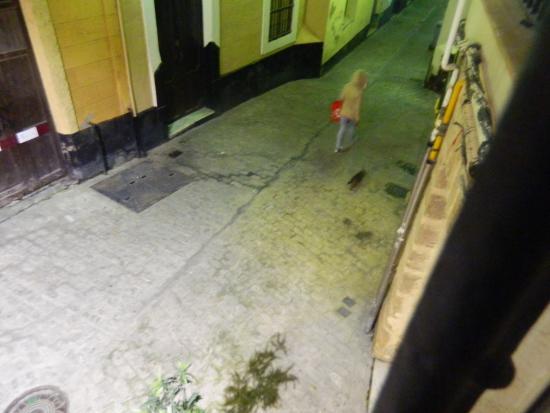 Hostal Fantoni: Vista hacia calle Flamenco