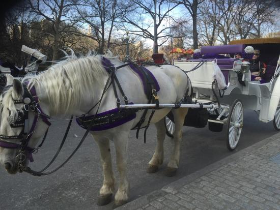 New York Carriage Company : Loved every minute of this carriage ride! The guy was very informative & friendly! Great memorie