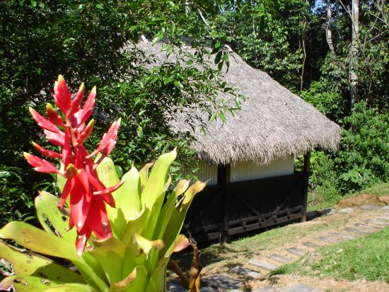 Cuyabeno Lodge: Cabin from outside