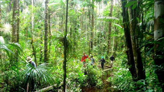 Cuyabeno Lodge: Hike trough the jungle