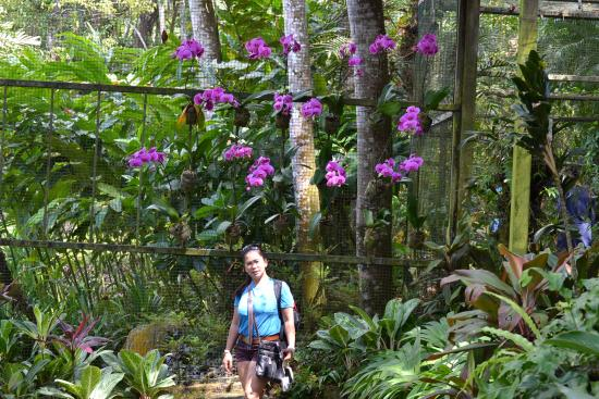 High Quality Singapore Zoo: Orchids Garden