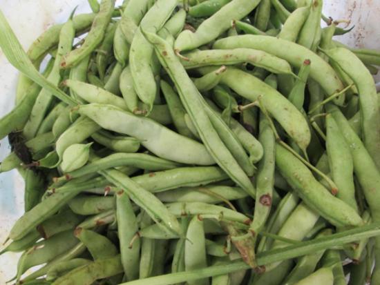 Monterey FarmersMarket : Beans