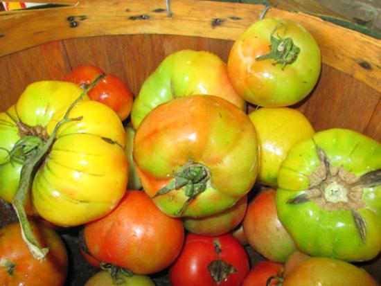 Monterey FarmersMarket : Tomatoes