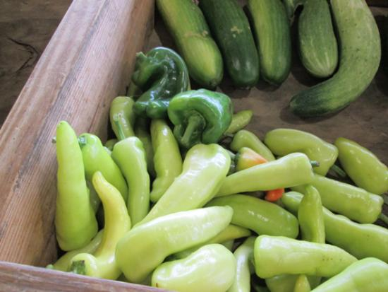 Monterey FarmersMarket : Squash