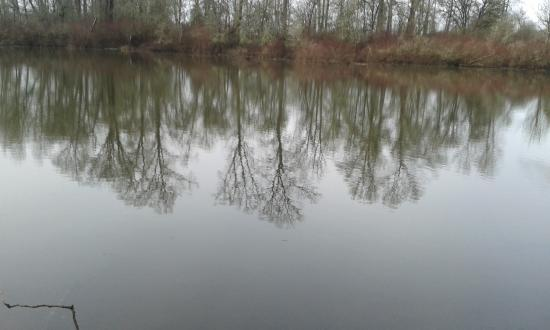 Minto-Brown Island Park: Reflections on the water