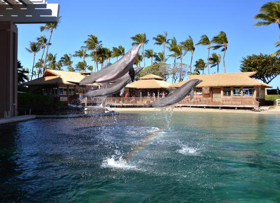 Waikoloa, HI: Dolphin Quest Hawaii