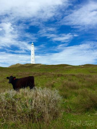 King Island Farm Tours - Meat Your Beef