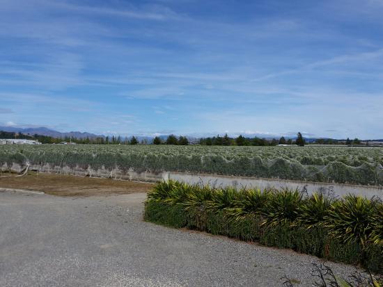 Renwick, Nova Zelândia: Vineyards