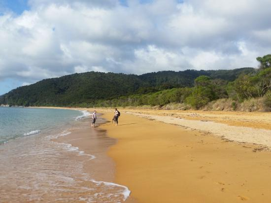 Totaranui Campground: Totaranui Beach