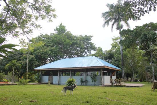 بونتا جوردا, بليز: Main Lodge