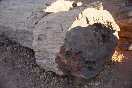 Petrified Forest Looks Like Wood Feels Stone