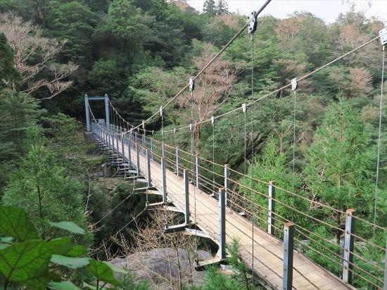 苔むす森(もののけ姫の舞台) - Picture of Shiratani Unsuikyo Valley, Kumage-gun Yakushima-c...