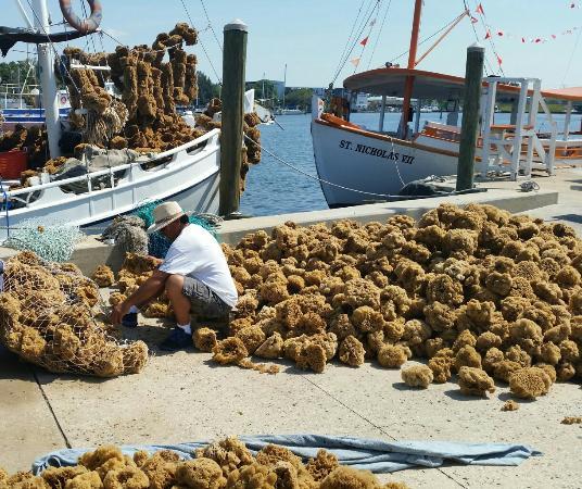 20140520 104312 1 large jpg picture of tarpon springs sponge docks rh tripadvisor com