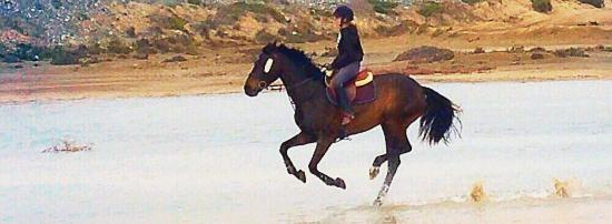 Curium Equestrian Center: Curium offers excellent hacking and showjumping opportunities