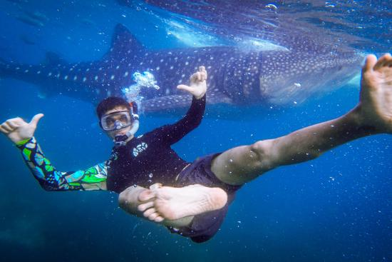 oslob whale shark watching picture of oslob whale shark watching