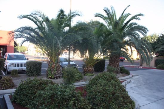 La Quinta Inn & Suites Visalia/Sequoia Gateway: Ля Кинта Инн & Сьютс Визалия /Секвойя Гейтвей