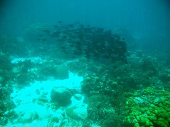 Anwar Tours: reef