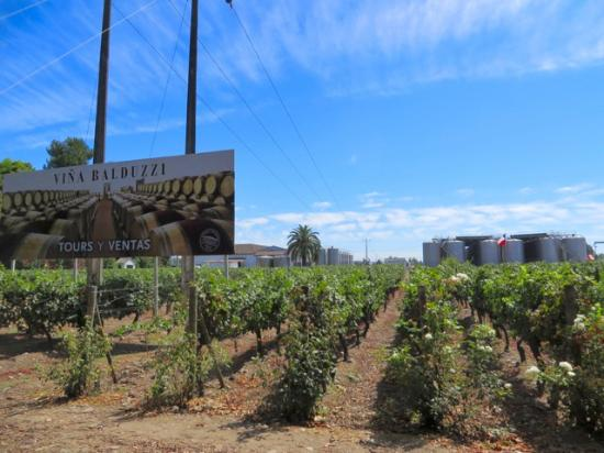 Balduzzi Vineyards & Winery