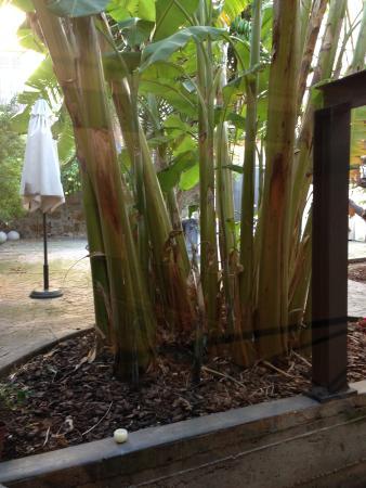 Zona colazione foto di il giardino di ballaro palermo - Il giardino di ballaro palermo ...