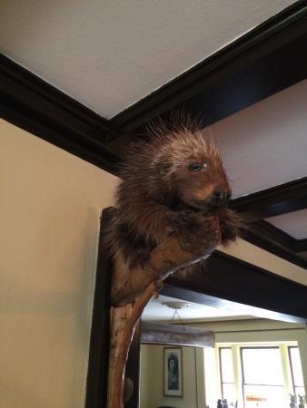 Porcupine Inn: photo0.jpg